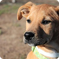 Adopt A Pet :: Paws - Berkeley Heights, NJ