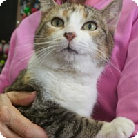 Adopt A Pet :: Sassy - Reston, VA