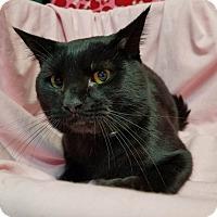 Adopt A Pet :: Poe - Murphysboro, IL