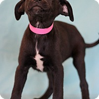 Adopt A Pet :: Pearl Jam - Waldorf, MD