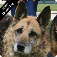Adopt A Pet :: Deb T. - Cupertino, CA