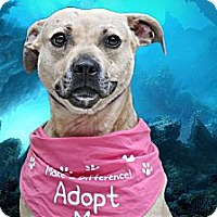 Adopt A Pet :: Chata - Needs a Foster Home - Livonia, MI