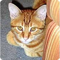 Adopt A Pet :: Archie - Alexandria, VA