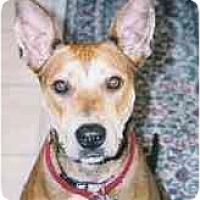Adopt A Pet :: Delilah - Kingwood, TX