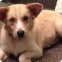 Adopt A Pet :: Buttercup - Hamilton, ON