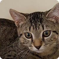 Adopt A Pet :: Chewy - Stafford, VA