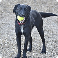 Adopt A Pet :: Nova - Meridian, ID