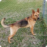 Adopt A Pet :: Gracie - Inverness, FL