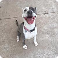 Adopt A Pet :: Queen ID# A462012 - Beverly Hills, CA