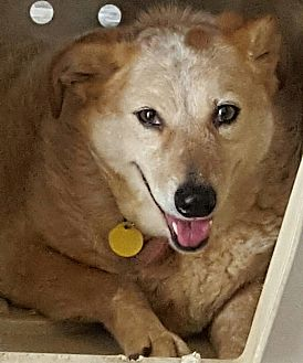 Australian Cattle Dog Mix Dog for adoption in Cranston, Rhode Island - Sally aka JAYLO