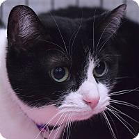 Adopt A Pet :: Bella - Flushing, MI