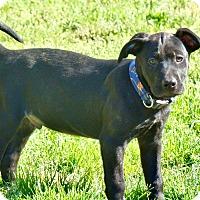 Adopt A Pet :: Lil T - Seabrook, NH