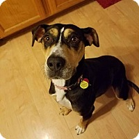 Adopt A Pet :: Aven - Rathdrum, ID