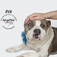 Adopt A Pet :: Zoe - Los Angeles, CA