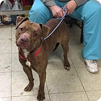 Adopt A Pet :: Jimmy - Cleveland, OH