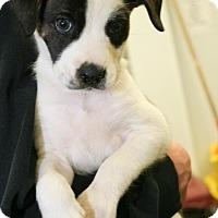 Adopt A Pet :: timber - Pompton Lakes, NJ