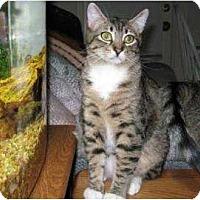 Adopt A Pet :: Marty - Schertz, TX