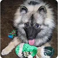 Adopt A Pet :: Mischa - Los Altos, CA
