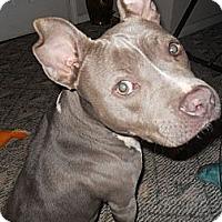 Adopt A Pet :: Joy - Conyers, GA