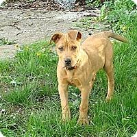 Adopt A Pet :: Spanky - Seattle, WA