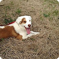Adopt A Pet :: Trixie - New Boston, NH