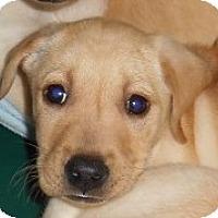 Adopt A Pet :: Bubba - redneck litter - Phoenix, AZ