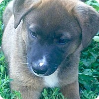 Adopt A Pet :: Branson - Morgantown, WV