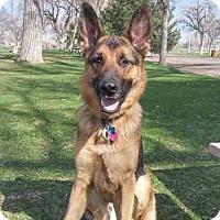 Adopt A Pet :: Shaymus - Denver, CO