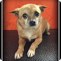 Adopt A Pet :: Spike - Indian Trail, NC