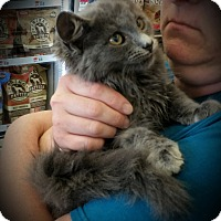 Adopt A Pet :: Victor - Fairborn, OH