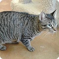 Adopt A Pet :: Dalton - Lake Charles, LA