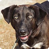 Adopt A Pet :: Henry - Jasper, GA