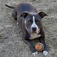 Adopt A Pet :: Tootsie - Palm Springs, CA
