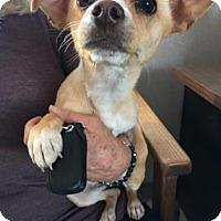 Adopt A Pet :: Holly - Visalia, CA