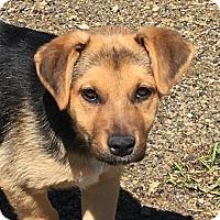 Adopt A Pet :: Leann - pending - Manchester, NH