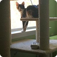 Adopt A Pet :: Candi - Richmond, VA