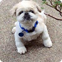 Adopt A Pet :: Kermit - Antioch, CA