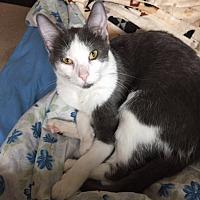 Adopt A Pet :: Cayson - Sedalia, MO