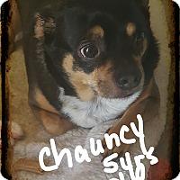 Adopt A Pet :: Chauncy - Palm Bay, FL