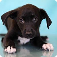 Adopt A Pet :: Police - Waldorf, MD