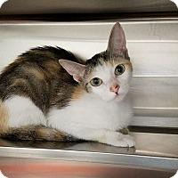 Adopt A Pet :: Farkle - Umatilla, FL