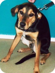 Black and Tan Coonhound Mix Dog for adoption in Winder, Georgia - *Junior