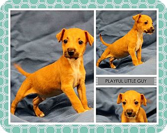 Black Mouth Cur Mix Puppy for adoption in Lufkin, Texas - Si
