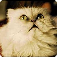 Adopt A Pet :: Torrie - Columbus, OH