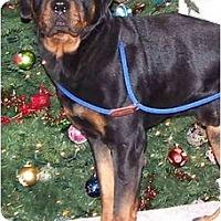 Adopt A Pet :: Max - PENDING - Toronto/Etobicoke/GTA, ON