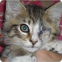 Adopt A Pet :: UNO - Riverside, RI