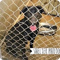 Adopt A Pet :: Amy Adams - Sunnyvale, CA