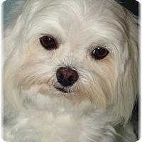 Adopt A Pet :: Toby - Palm City, FL