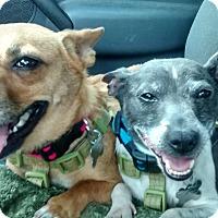 Adopt A Pet :: Travis - richmond, VA