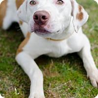 Adopt A Pet :: Eric - Greenwood, SC